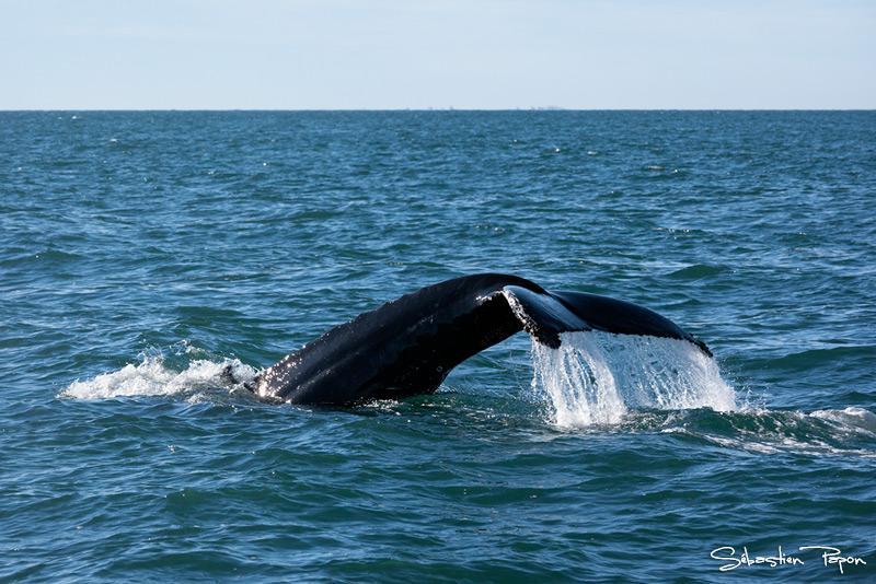 Baleine_IMG_12080