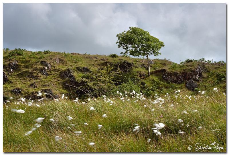 Connemara Landscape